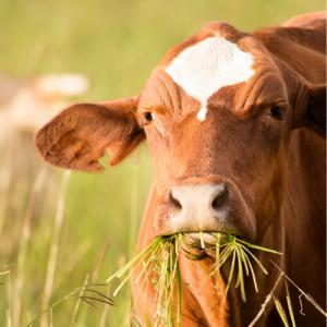 | Cow1 | VetNOW | Veterinary Telemedicine Platform for Veterinary Specialty Care | 1000 Noble Energy Drive, Suite 600 Pittsburgh, PA 15317 | https://testweb.vetnow.com/