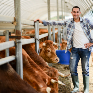 | Cow2 | VetNOW | Veterinary Telemedicine Platform for Veterinary Specialty Care | 1000 Noble Energy Drive, Suite 600 Pittsburgh, PA 15317 | https://testweb.vetnow.com/