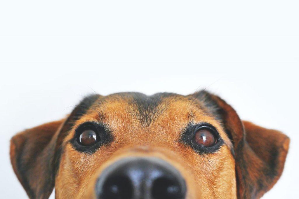 VetNOW FAQS | Hero Image | Veterinary Telemedicine Platform for Veterinary Specialty Care | 1000 Noble Energy Drive, Suite 600 Pittsburgh, PA 15317 | https://testweb.vetnow.com/